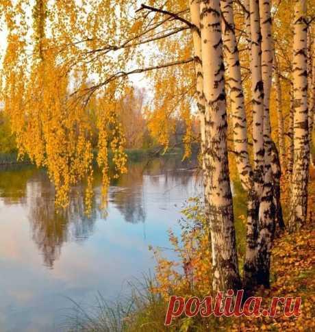 Как грустный взгляд, люблю я осень. В туманный,тихий день хожу Я часто в лес и там сижу  На небо белое гляжу Да на верхушки темных сосен Люблю,кусая кислый лист С улыбкой развалясь ленивой Мечтой заняться прихотливой Да слушать дятлов тонкий свист Трава завяла вся…холодный Спокойный блеск разлит по ней И грусти тихой и свободной Я предаюсь душою всей Чего не вспомню я?Какие Меня мечты не посетят А сосны гнутся,как живые И так задумчиво шумят