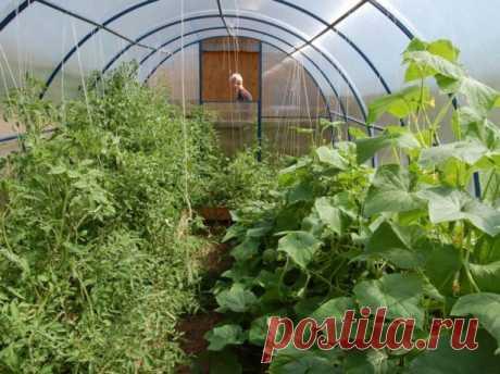 Совместимость овощей в теплице из поликарбоната и пленки, отзывы