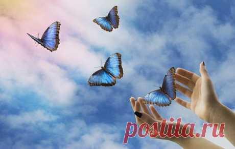 A que es actuado las mariposas por la interpretación de los libros de oniromancia diferentes. A que es actuado las mariposas a las muchachas y las mujeres casadas | Mí Amable de la Mariposa en los sueños – la imagen ambiguo. Por un lado, es el símbolo de la corta duración de los sentimientos, la ligereza, la belleza pasajera. Con otra – el símbolo de la alegría, predveste del encuentro mucho tiempo esperado o el amor. Interpretar el sueño debe depende de sus circunstancias, los detalles y las sensaciones después del despertar. A que es actuado las mariposas por el libro de oniromancia familiar Si las mariposas revolotean sobre...