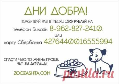 """""""Дни Добра"""" продолжаются! Откажись от чашки любимого кофе или плитки шоколада раз в месяц в пользу бездомных животных - это отличная традиция и польза твоему здоровью! ;) Напоминаем, что вы можете помочь, перечислив любую сумму в пользу приюта на номер ☎ 8-962-827-2410, Билайн ☎ 8-913-792-0210, МТС или на карту Сбербанка:⚡ 4276440016555994 Получатель: Стародуб Анна Леонидовна Помогать проще, чем ты думаешь!👍"""