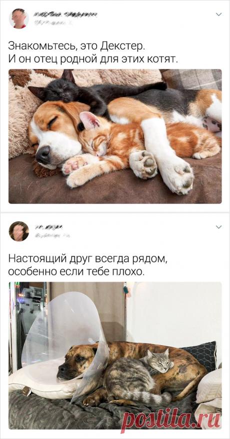 20+ раз, когда кошки с собаками наплевали на предрассудки и стали лучшими друзьями   Рекомендательная система Пульс Mail.ru