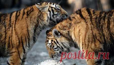Интересные факты о животных: 40 фото - Страница 6 из 40 - URAPRESS