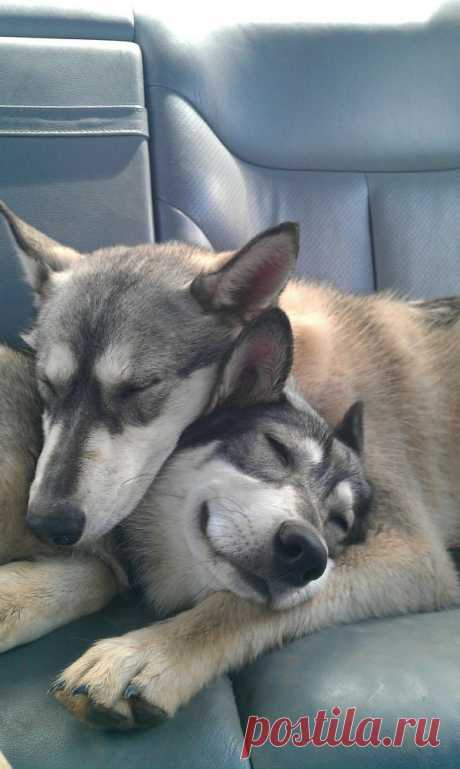 two sisters - Imgur | Dog
