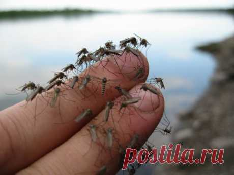 Powerful and VERY simple means from mosquitoes