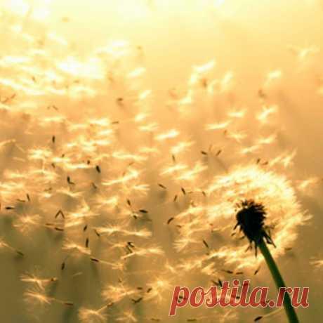 Отпустив, мы можем двигаться в - Новую жизнь.  Как держит?  Как мне это отпустить? В личных отношениях, в ситуации, с деньгами, мечтами, желаниями. В изменяющихся условиях жизни.