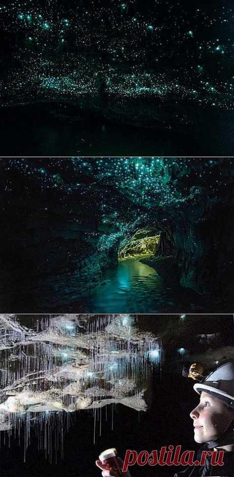 Новая Зеландия. Пещера с светлячками | МИР ТУРИЗМА