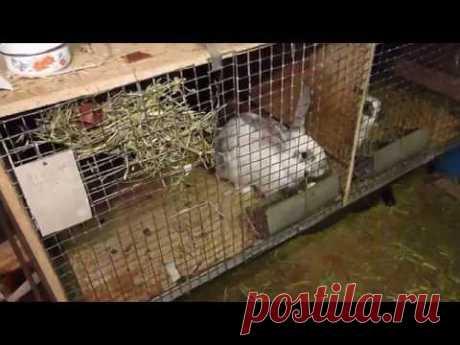 Кормление кроликов зимой в гараже — Яндекс.Видео