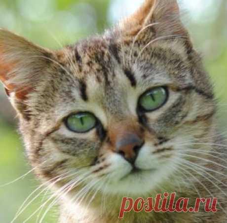 Кошки призваны наблюдать за людьми Кошки призваны наблюдать за людьми кот