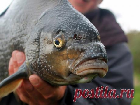 Рыбалка на леща - тонкости, приемы
