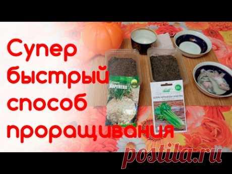 Супер быстрый способ проращивания мелких семян сельдерея