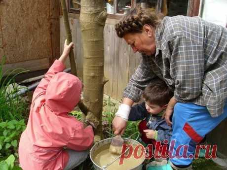 Лечебная болтушка для садовых деревьев / Модное Настроение
