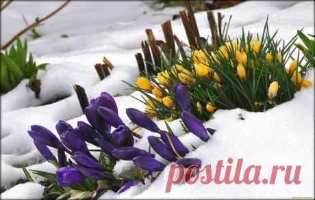 Среди холода и мирской суеты, расцветают чудеса среди зимы...