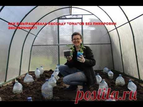 Как я выращивала рассаду томатов без пикировки. ЭКСПЕРИМЕНТ! - YouTube
