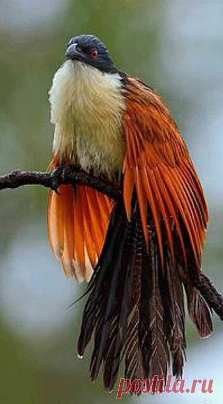 Aves e pássaros coloridos e exóticos