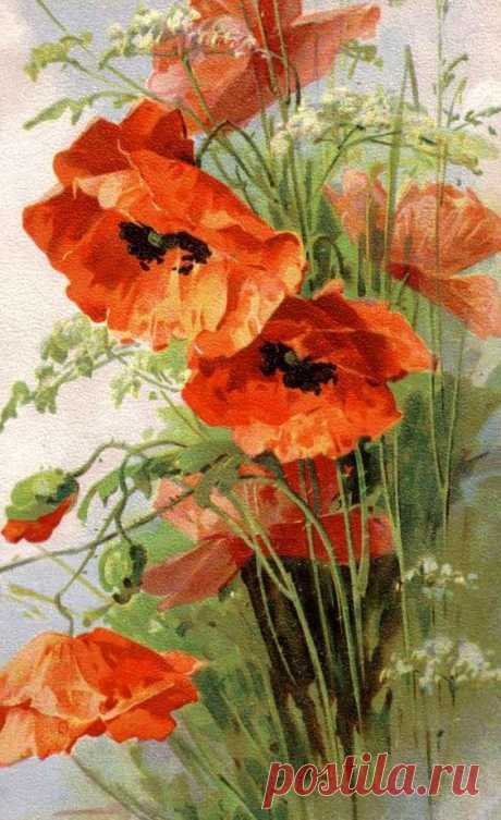 (723) Poppies - Cross stitch pattern pdf format