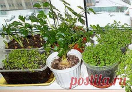 Выращивание зелени зимой | Природное земледелие
