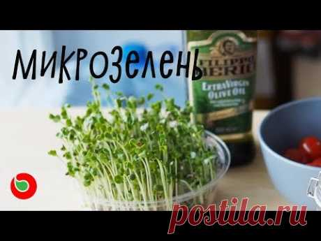 Как вырастить микрозелень дома и сделать салат. Витаминная бомба.