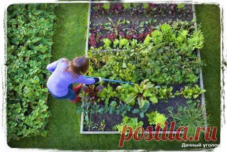 На моей даче, не растут сорняки уже несколько лет - мой личный, эффективный метод | Дачный уголок | Яндекс Дзен