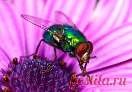 #семья #чистота #стирка #насекомые #легко #идея Лёгкое отстирывание чёрных точек от мух | Семейные заботы | Яндекс Дзен