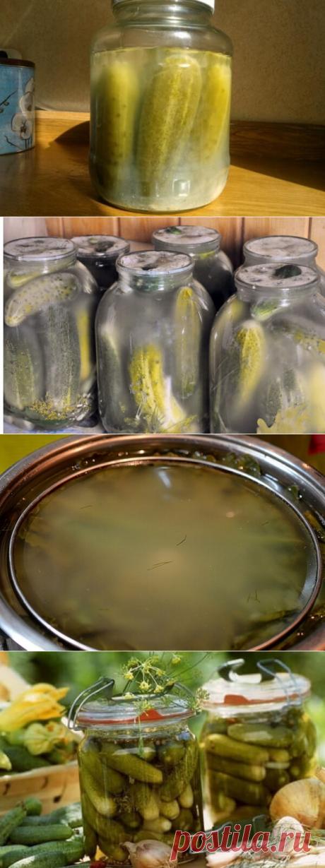 Почему мутнеет рассол огурцов в банке после закатки, что делать с маринованными и солеными консервированными огурцами   Тысяча и одна идея