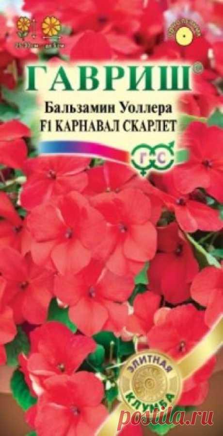 """Семена. Бальзамин Уоллера """"Карнавал Скарлет F1"""" (5 штук) Всхожесть: 100%. Компактный куст высотой 25-30 см, диаметром 25-30 см. Цветки красные, диаметром 5 см. Хорошо растет в полутени. Обильно цветет. Влаголюбив, но не переносит переувлажнения. Для клумб, кашпо и цветников. Можно выращивать как комнатное растение."""