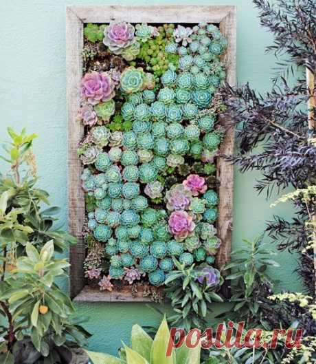 Вертикальные сады. Идея для декора.