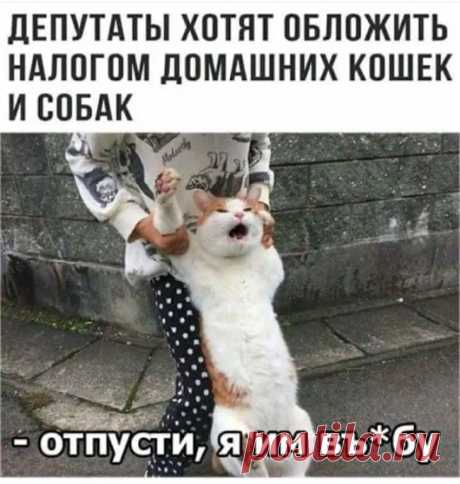 Коты и кошечки - Google+