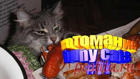 видео смешные коты, смешное видео коты, коты смешное видео, смешное видео кот, видео для котов, видео про котов, коты приколы видео, коты видео приколы, говорящие коты видео, видео смешные животные, животное смешное, смешное видео животные, животные смешно, смешных животных, приколы котов, кот приколы, приколы котами, коты прикол, кошки смешные видео, про кошек смешное, про смешных кошек, видео кошек смешные, кошка смешное видео, смешно кошки, видео кошки смешные, смешные кошки и