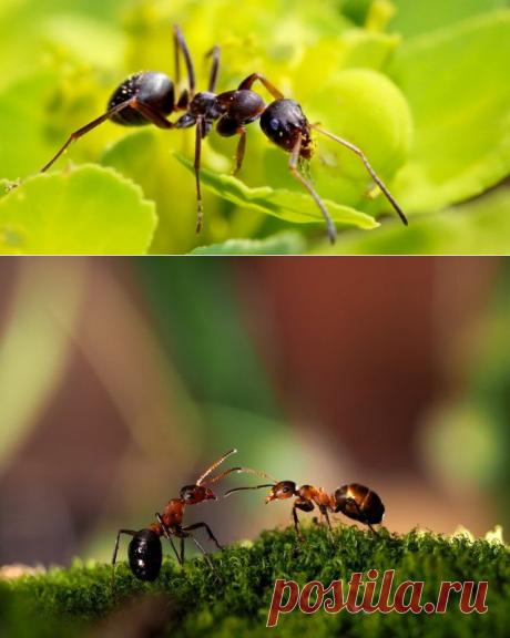Вывести навсегда муравьёв с участка и из дома - САМЫЕ ПОЛЕЗНЫЕ СОВЕТЫ - Обязательно сохраните! - Жизнь планеты
