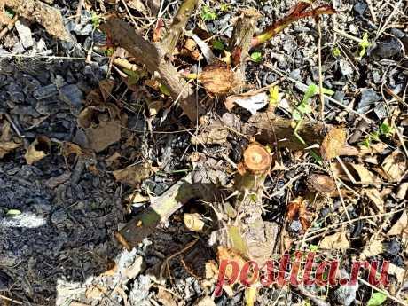 Беззаботный сад! Отличная замена розам, если нет времени на уход и жителям северных регионов   GardenLife   Яндекс Дзен