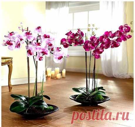 4 способа размножения орхидей Здравствуйте, уважаемые любители орхидей! В этом видео я подробно расскажу о 4-х видах размножения орхидей : делении , черенковании , о размножении детками и семенами. Если видео Вам понравится , не з…