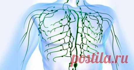 Признаки забитой лимфатической системы и 9 способов ее очистки! Лимфатическая система также как и остальные органы нуждается в очищении!  Избавление от токсических веществ, накопленных в организме, является одним из важнейших аспектов здоровья человека. Тело чел