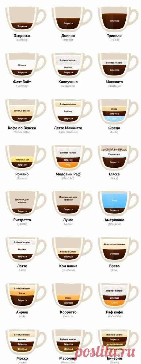 Для истинных ценителей кофе: все виды напитка на одной картинке. Стань экспертом! — informed news 24