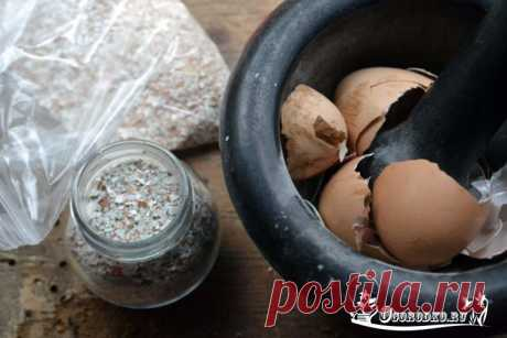 Яичная скорлупа как удобрение - как сделать, как применять подкормку