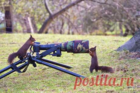 Профессия: фотограф. 20 кадров, на которых животные недвусмысленно (и очень мило) выражают свои профессиональные наклонности + СЕЛФИ-БОНУС | Журнал Ярмарки Мастеров
