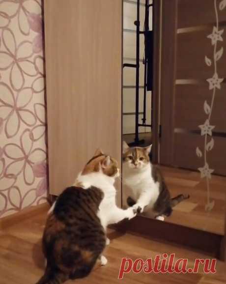 Моя семья сделала мне сюрприз в виде ужина, а наша кошка Милана ищет путь в Зазеркалье | О кошках и не только | Яндекс Дзен