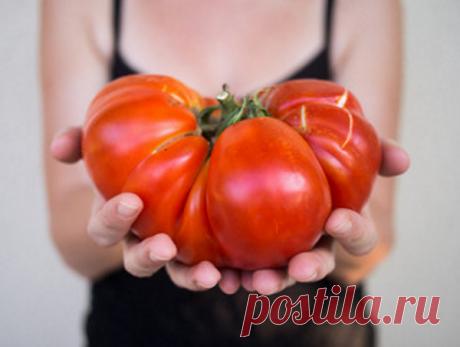 7 вкусных сортов-гигантов томатов. Выбор на 2019 год | Дачная жизнь | Яндекс Дзен