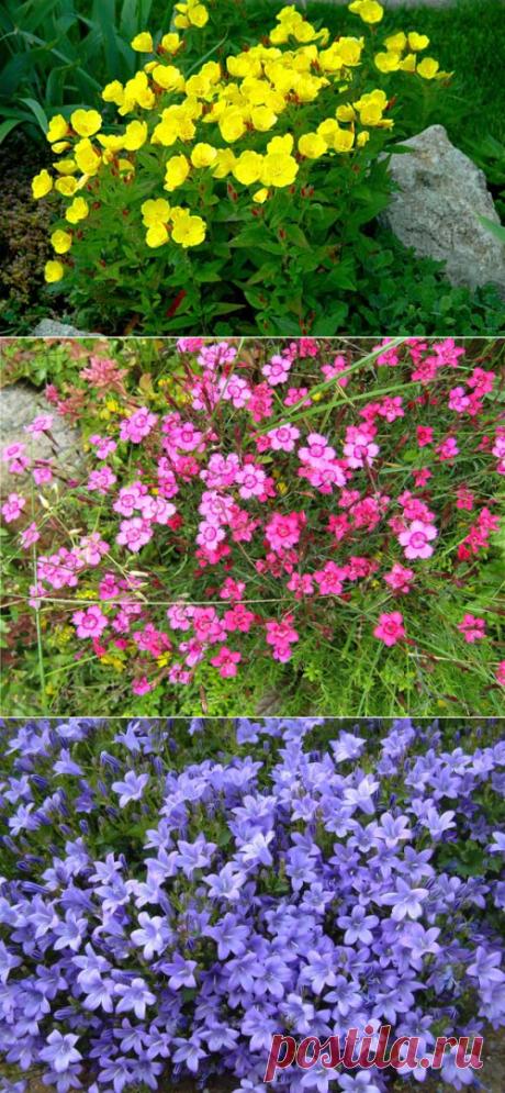 Дачные Дела: Многолетние растения для альпийской горки, бордюров, почвопокровные