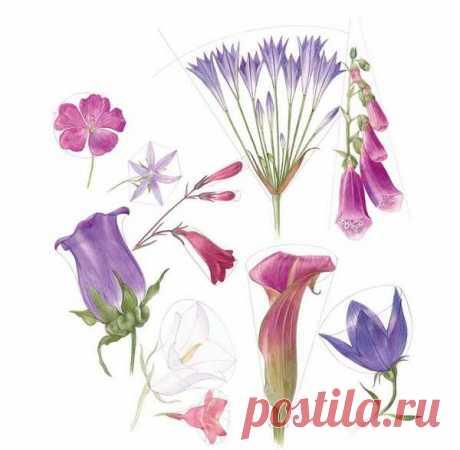 Учимся рисовать цветы – Как нарисовать цветы (уроки рисования цветов) карандашом поэтапно