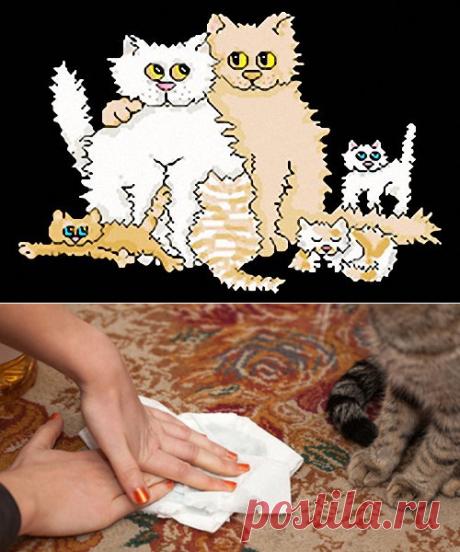 Удаление кошачьей (и не только) мочи навсегда
