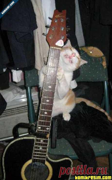 котенок гитарист