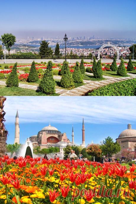 Фестиваль Тюльпанов в Стамбуле: когда и где смотреть – 2019 год