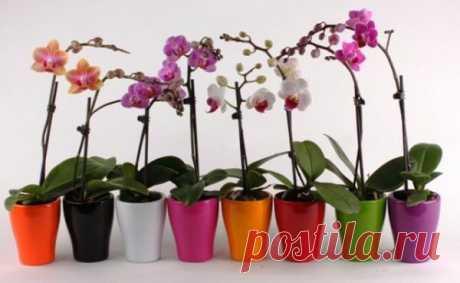 У вас есть одна орхидея. А хотите, чтобы их было 100? Орхидея – это нежный, красивый цветок, настоящий символ женственности! Хотите разводить орхидеи – прислушайтесь к этим советам. Уже совсем скоро на вашем подоконнике появится много цветов орхидеи на зависть всем соседкам. У вас есть одна орхидея. А хотите, чтобы их было 100?