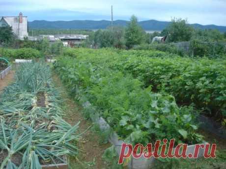 Традиционная агротехника очень трудоемка, а это снижает интерес к садоводству среди молодежи