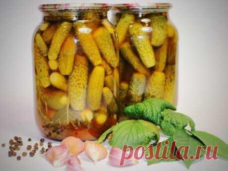 Делюсь рецептом самых вкусных маринованных огурчиков | Блог Палыча | Яндекс Дзен
