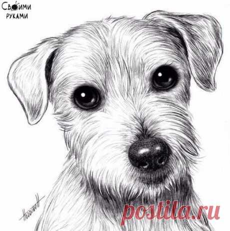 Рисуем собаку с добрыми глазами — Сделай сам, идеи для творчества - DIY Ideas