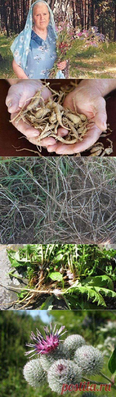 Травы, которые проникают в суставы и восстанавливают хрящи - My izumrud