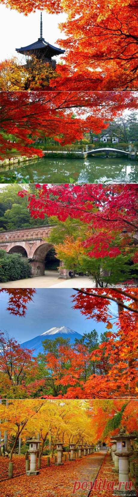 Японская осень.