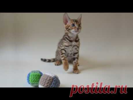 Мячик для котёнка / вяжем из остатков пряжи