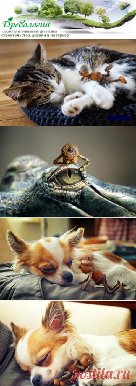 Желуди-лучшие друзья животных. Не верите?